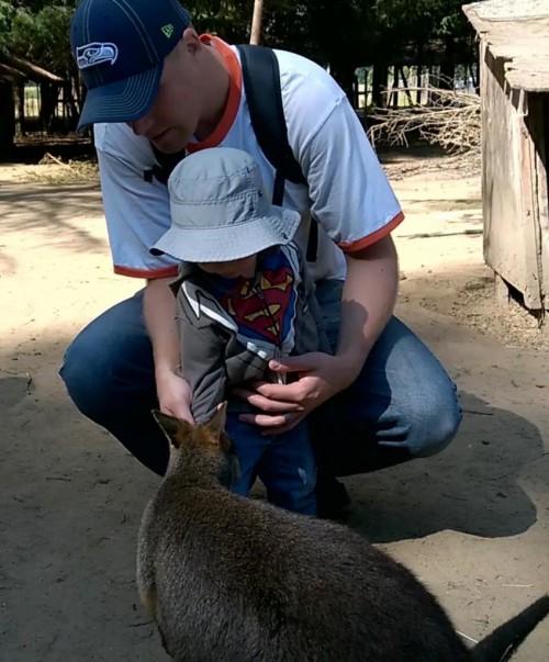 kangaroofarm3
