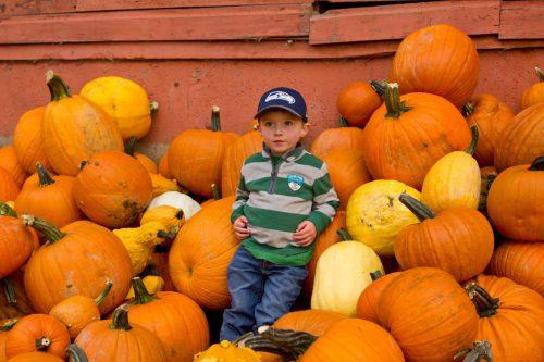 pumpkins2016_1