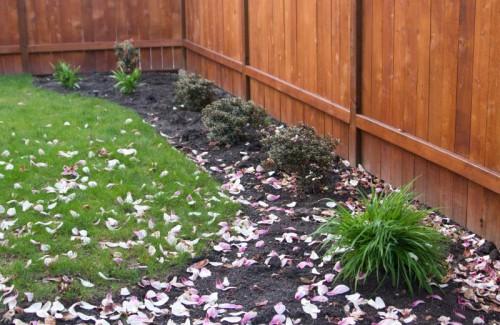 backyardplants