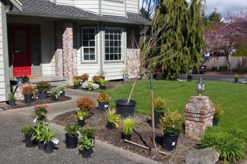 frontyardplants1